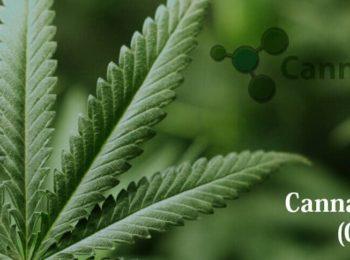 Cannabis Science Inc (OTCMKTS:CBIS) Subsidiary Buys Majority Shares of Jinvator
