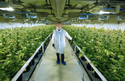 Aurora Cannabis Just Acquired A Major German Medical Cannabis Company
