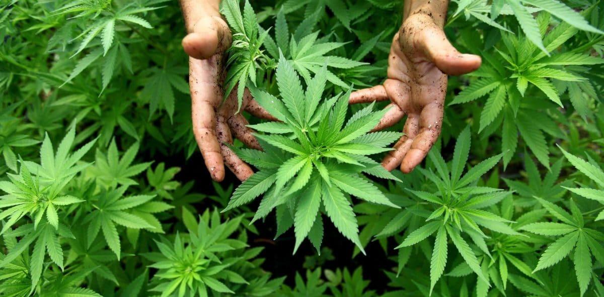 *Cannabis Industry Game-Changer Threatens Massive Market Disruption