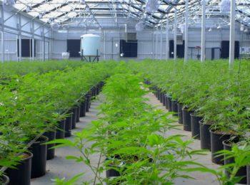 Aurora Cannabis Begins to Trade on the Toronto Stock Exchange