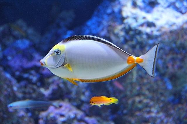Scientists Gave Marijuana to Fish to Relax Them