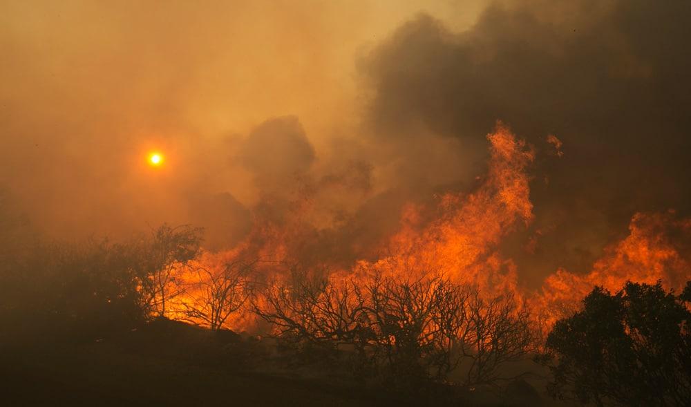 Emerald Triangle Marijuana Farms Are Burning in California