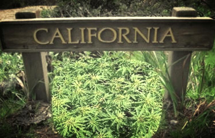 California will Tax Marijuana as High as 45%
