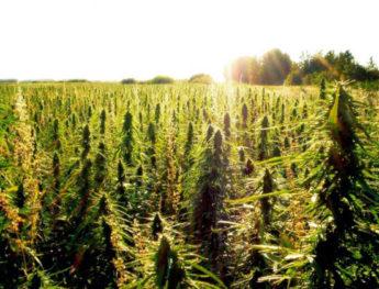 Medical Marijuana May Soon Be Legal In Kentucky
