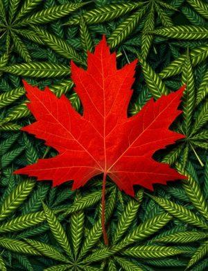 Investors Rushing to Take Advantage of Global Cannabis Boom