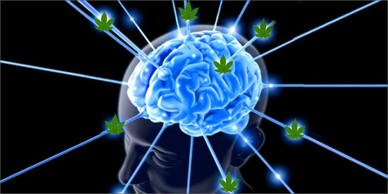 University of Utah Wants to Study Effect of Marijuana on the Brain