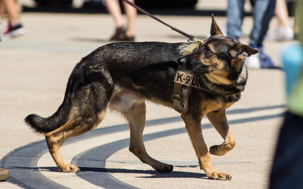 Illinois Police Threaten to Kill K-9 Dogs if Marijuana is Legalized