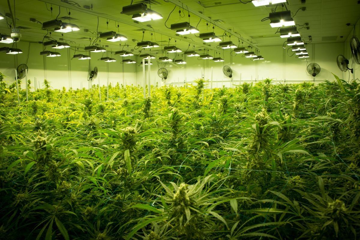 Oregon's Medical Marijuana Growers are Preparing for This
