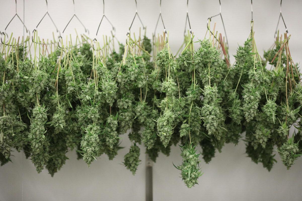Massachusetts Panel Approves First State Recreational Marijuana Growing License