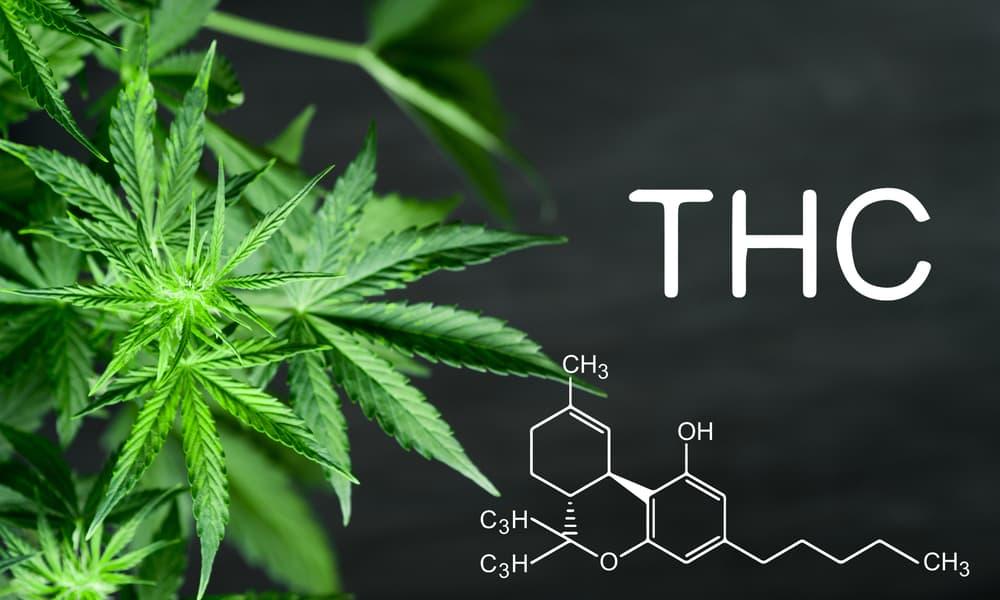 Scientists Have Made Marijuana Compounds Without Using Marijuana