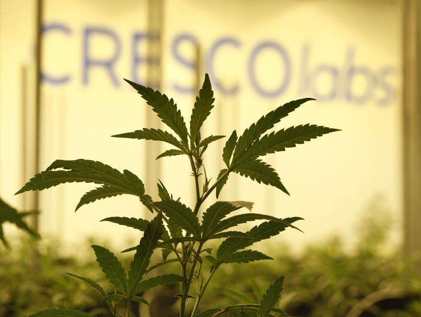 Cresco Labs to Acquire Marijuana Distributor for $850 Million