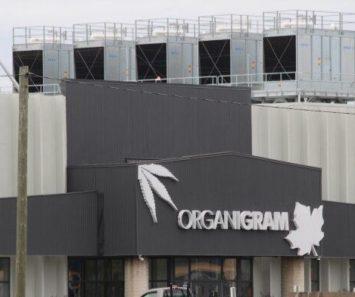Organigram Skyrockets Over 35% After Q1 Revenue Beat