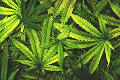 Massachusetts Judge Upholds Order to Temporarily Ban Recreational Marijuana Sales