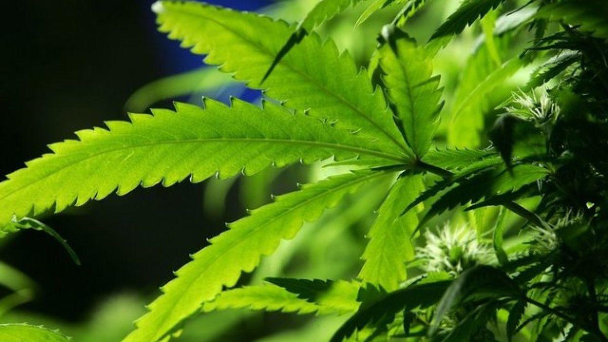 Virginia's New Marijuana Decriminalization Law Takes Effect