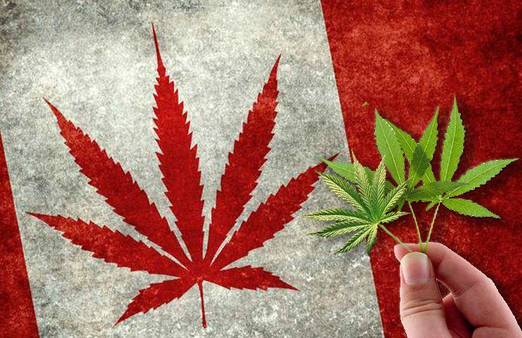 Canada's Marijuana Inventory Has Hit a New High