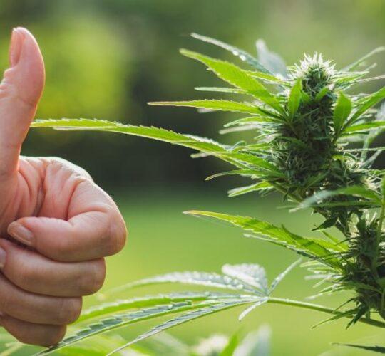 Indiana Takes a Step Towards Marijuana Legislation