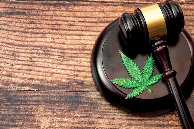 Democrat Senators Introduce Bill to Decriminalize Marijuana at Federal Level